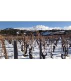 2014 SRC Alberello, Etna Rosso